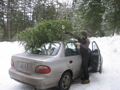 Christmas Tree on the Roof of the Car, Washington