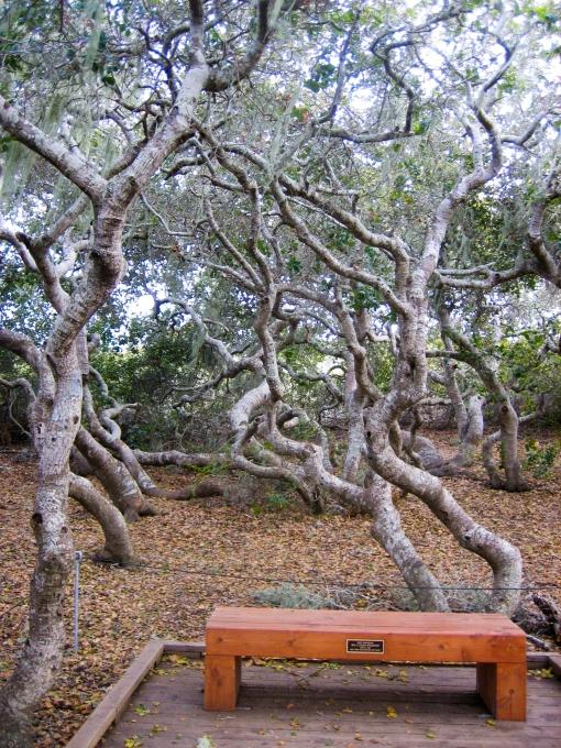 Elfin Forest, Los Osos CA