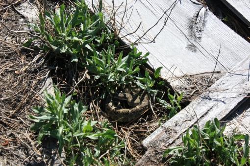 rattlesnake McClure Twisp WA