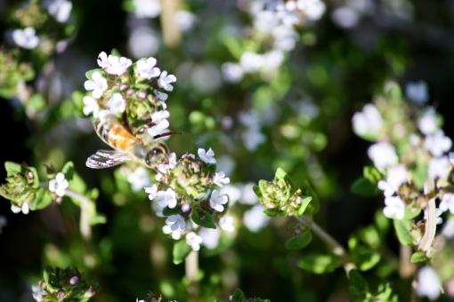 bee on flower in garden, Washington