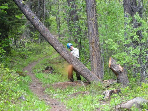 forest ranger safely using chainsaw Okanogan National Forest