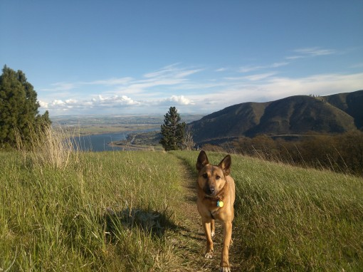 dog hiking columbia gorge WA