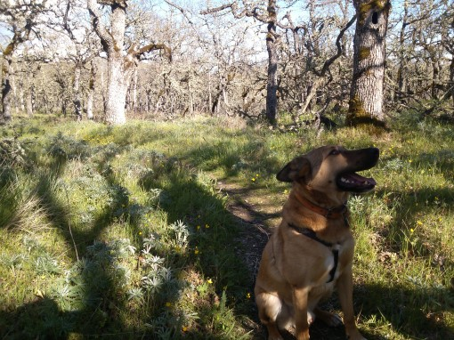 rescue dog off leash in oaks, columbia gorge wa
