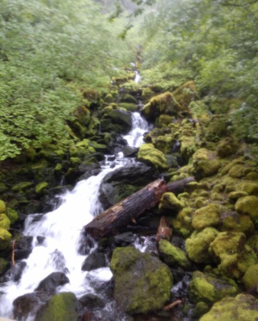 Falls Creek Trail, Carson WA