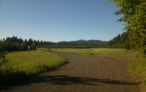 dirt road meadow in the forest, Trout Lake WA