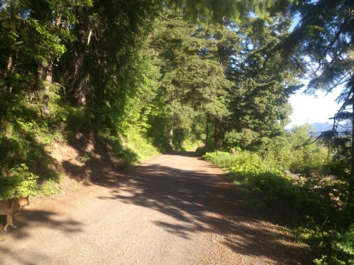 shady lane at Trout Lake WA