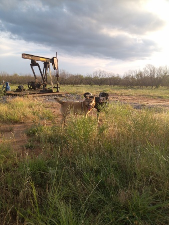 dogs on the ranch with oil lease, Texas
