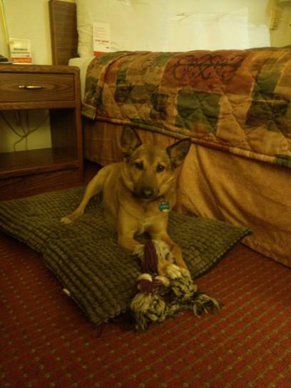 dog-friendly Super8 Motel, Salt Lake City UT