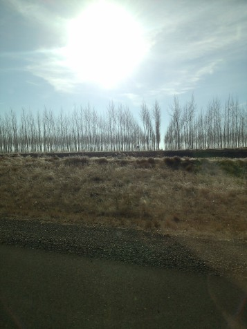 tree farm in Eastern Oregon