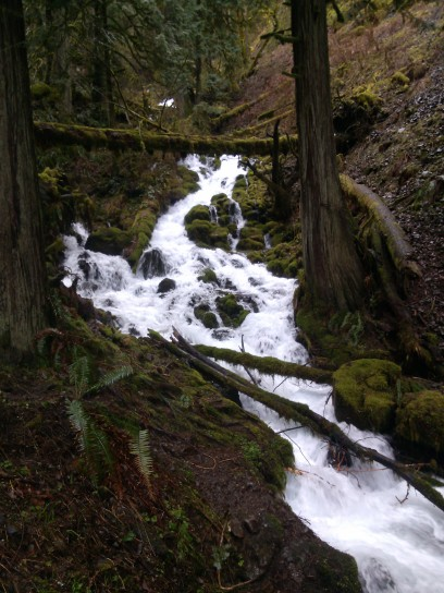 flowing stream after rain, Columbia Gorge