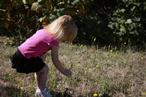 child picking wildflowers, White Salmon Wa