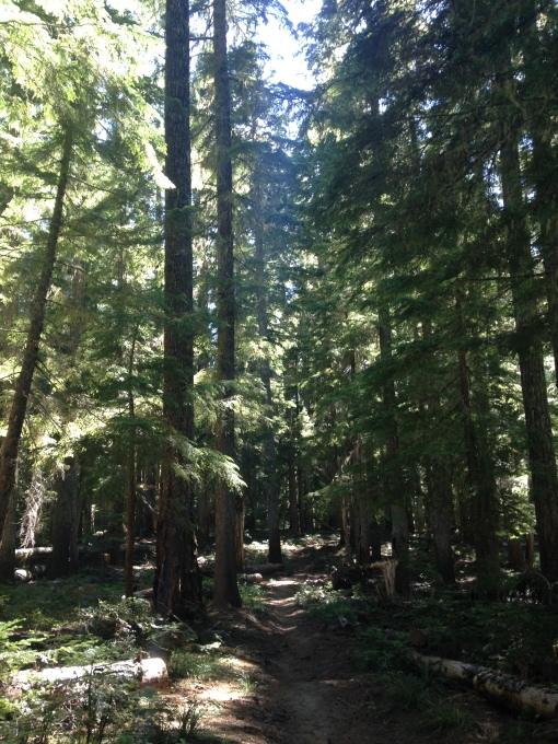 mother nature mount adams wilderness wa