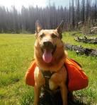 dog camping, riley camp trail, mt adams wa