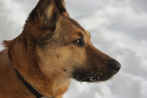 snow dog PNW winter 2017