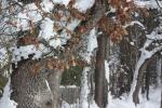 winter leaves PNW 2017