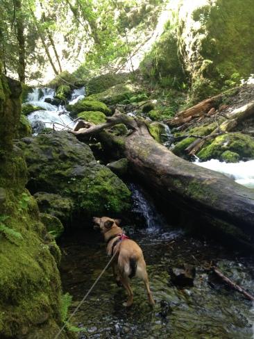 Emerald Falls, Wyeth Trailhead Oregon Columbia Gorge hikes