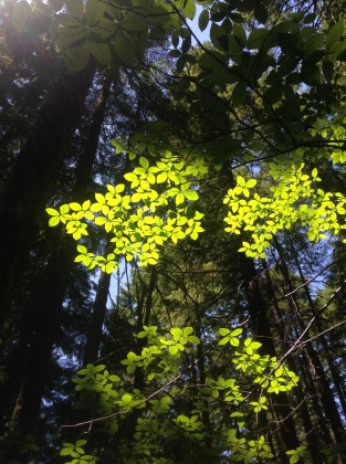 Gifford Pinchot National Forest, Trapper Creek Wilderness WA