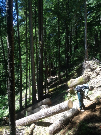 trail work, Trapper Creek Wilderness WA