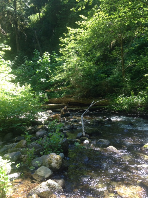 Trapper Creek Wilderness, Gifford Pinchot National Forest