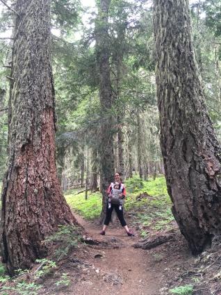 Sleeping Beauty trail 37, Trout Lake WA