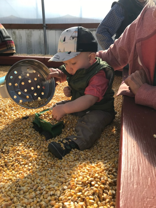 corn pit, Packer Orchard Pumpkin Patch Hood River OR